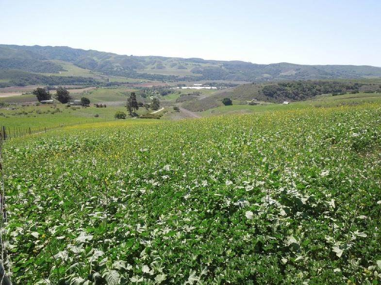 2. Lots / Land for Sale at 4655-4695 Sweeney Road Lompoc, California 93436 United States