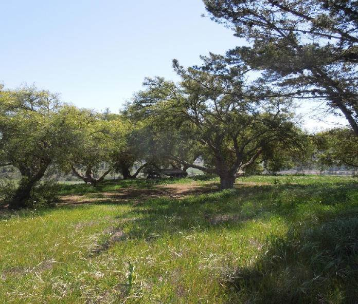 14. Lots / Land for Sale at 4655-4695 Sweeney Road Lompoc, California 93436 United States
