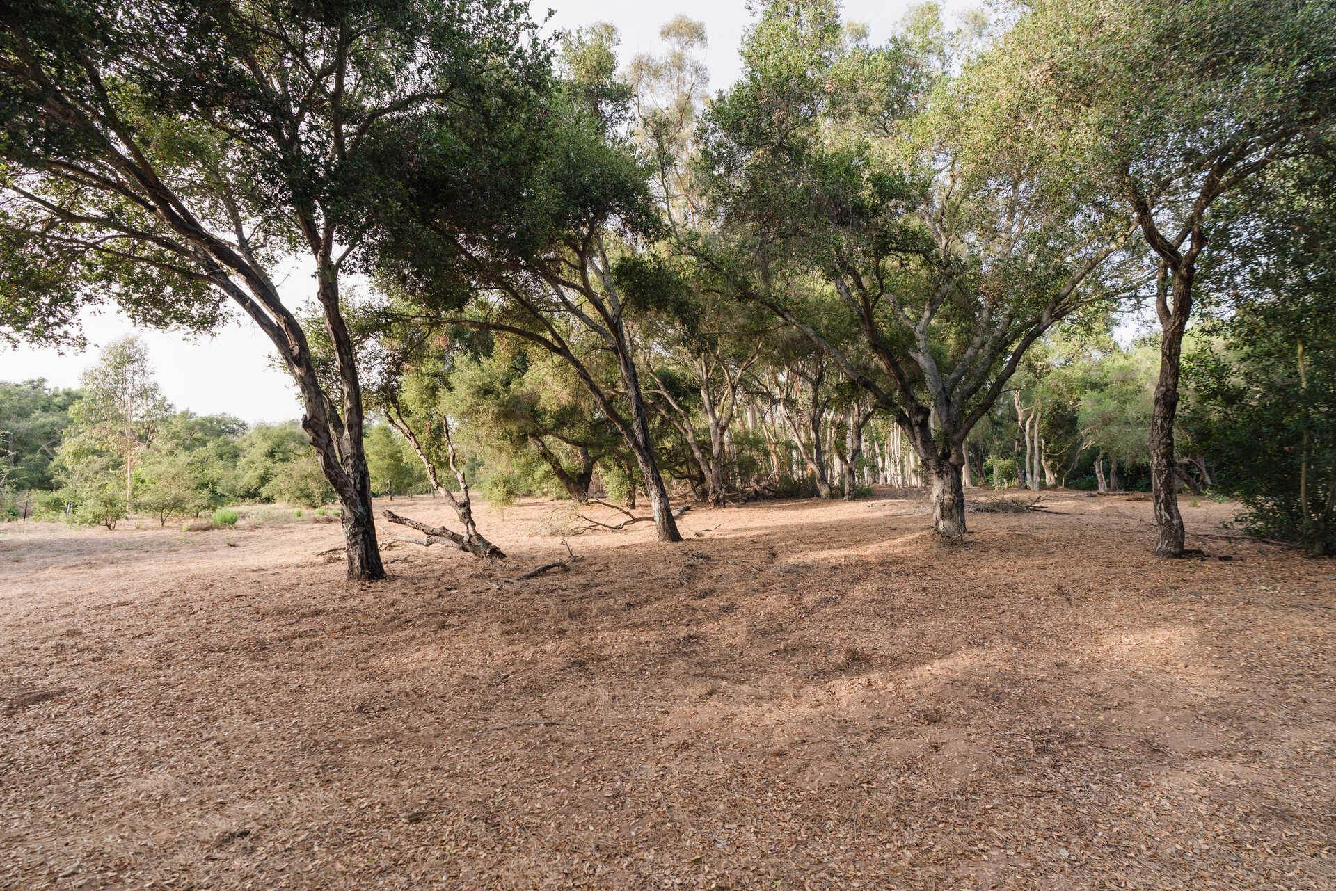 16. Lots / Land for Sale at 700 Riven Rock Road Montecito, California 93108 United States