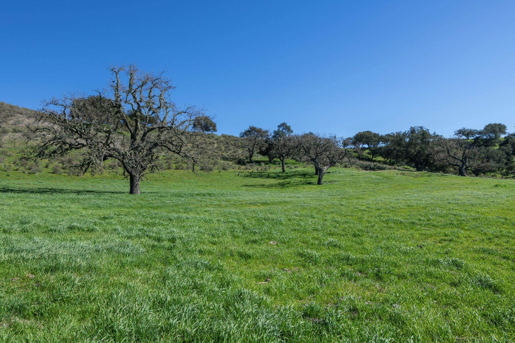 Land for Sale at 5410 Foxen Canyon Road Los Olivos, California 93441 United States